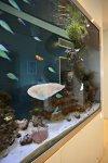 Paradiso Dee Why Aquarium