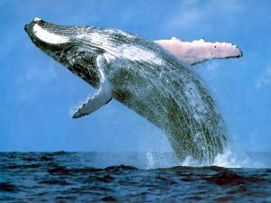 whale watching sydney accommodation
